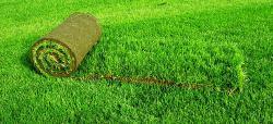 Продажа семян для газона и рулонных газонов