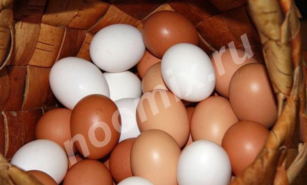 Продаю отличное Яйцо куриное, Республика Бурятия