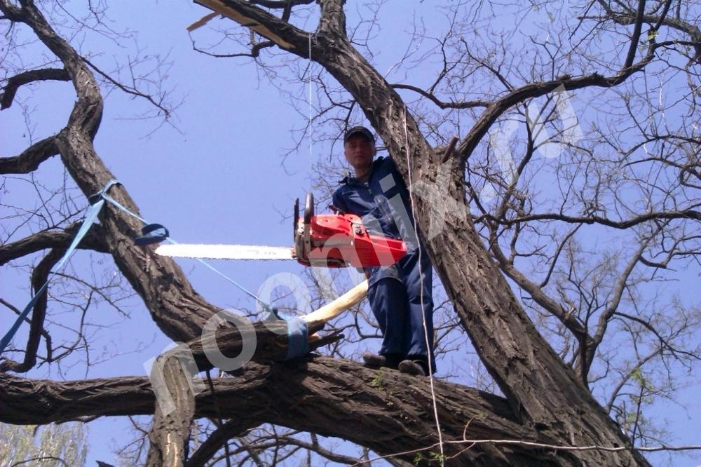 Служба удаления аварийных деревьев, Псковская область