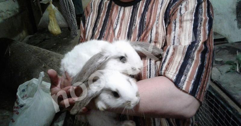 Продаю Чудесных вислоухих кроликов