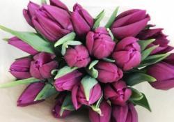 Открыт предзаказ тюльпанов к 8 марта