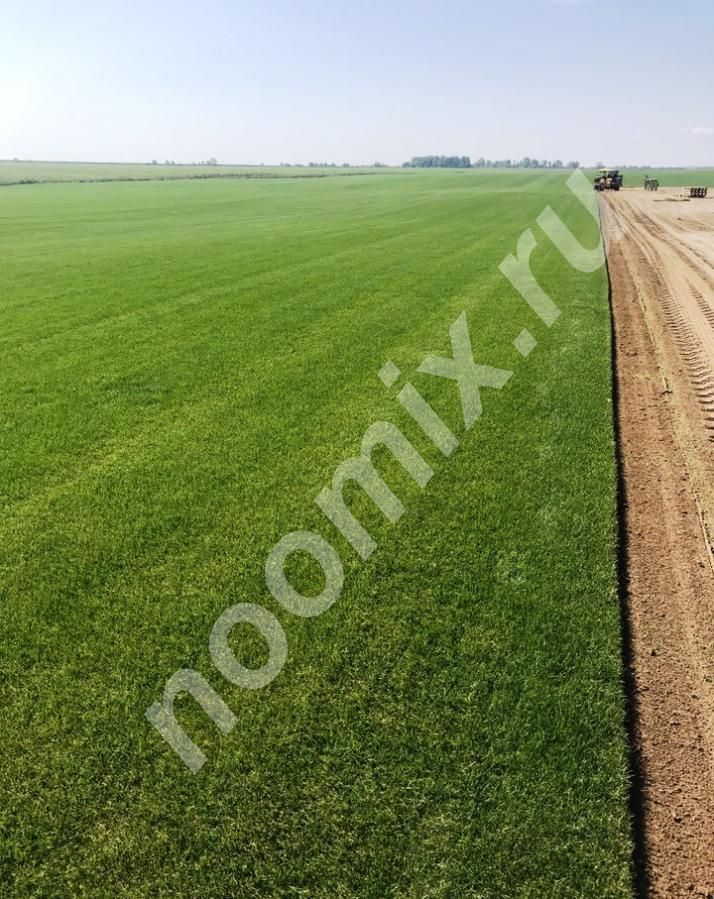 Продаем Рулонный газон, Московская область