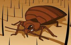Дезинфекция насекомых в Ю Бутово