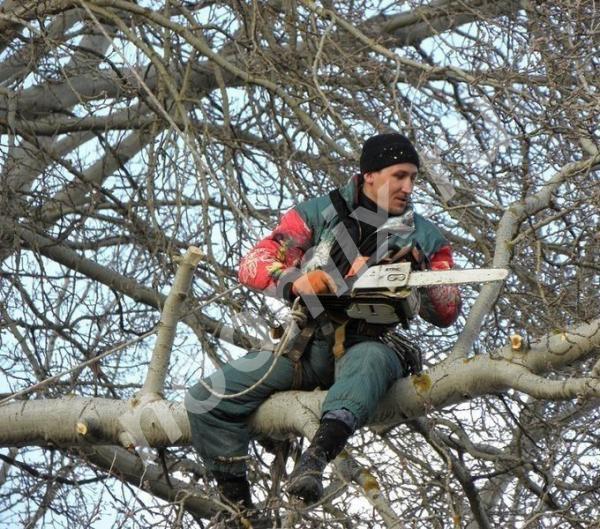 Бригада вальщиков деревьев, Тульская область