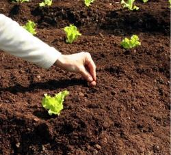 Садовый грунт. биогрунт
