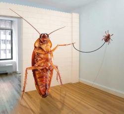 Дезинфекция насекомых в Царицыно