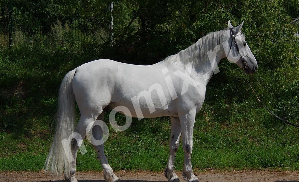 Предлагаем лошадей для проката и обучения, Московская область