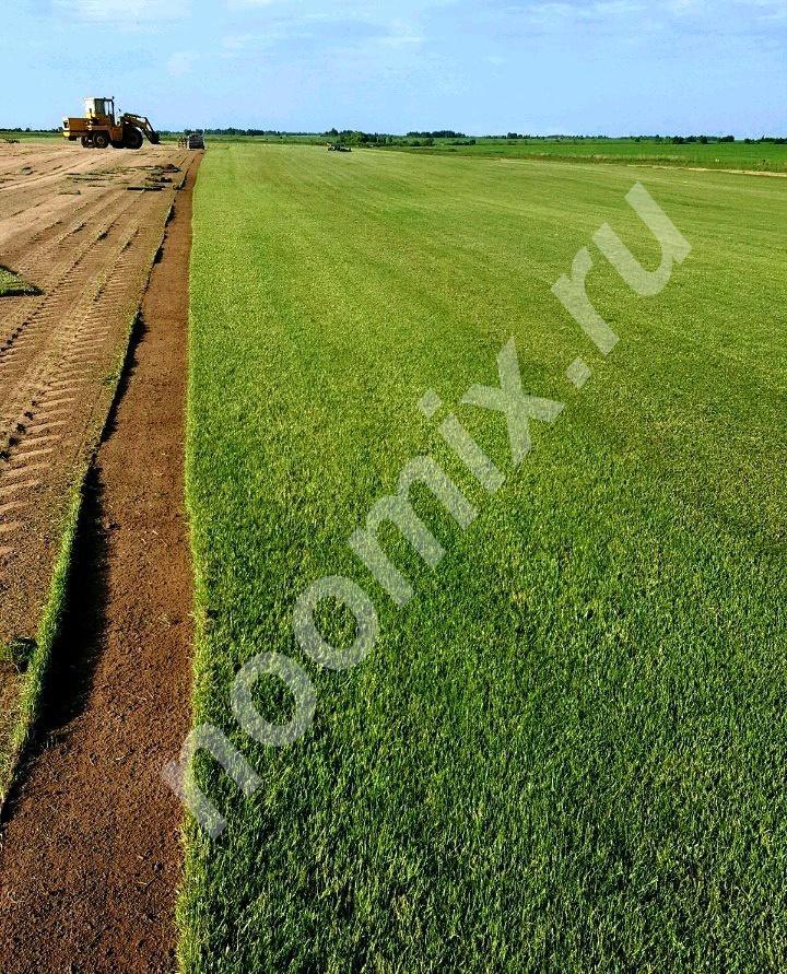 Готовый газон в рулонах от производителя, Московская область