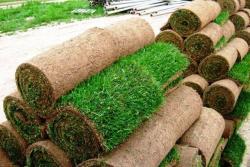 Рулонный газон со 100 приживаемостью. Гарантия
