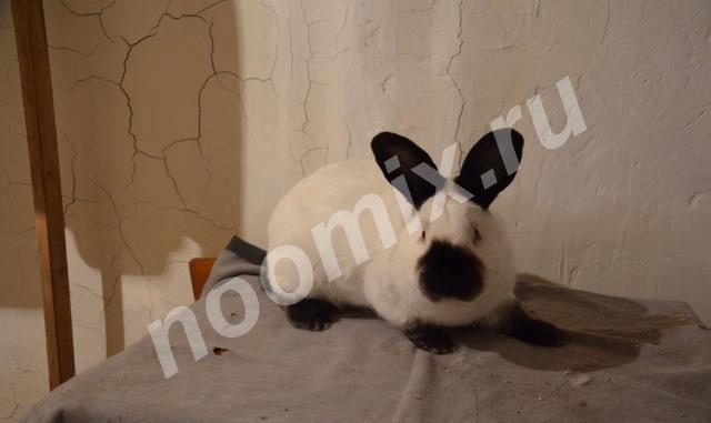 Все породы кроликов, Брянская область