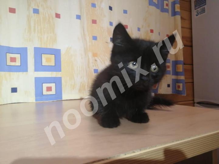 Черный котенок Девочка , ищет хозяина и друга,  МОСКВА
