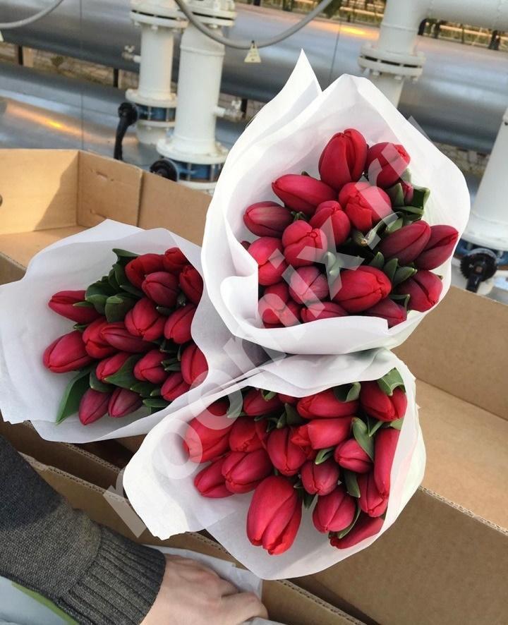 Принимаем заказы на тюльпаны к 8 марта, Томская область