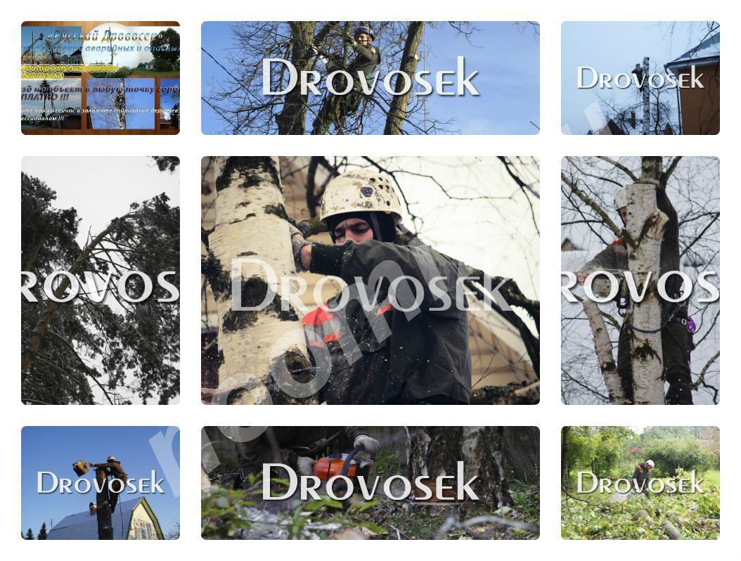 Спил деревьев, удаление деревьев, Белгородская область