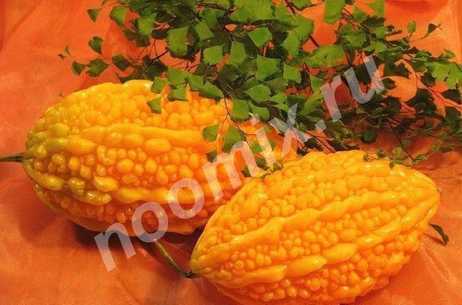 Продаю семечки момордики районированна в Саратове,  Саратов