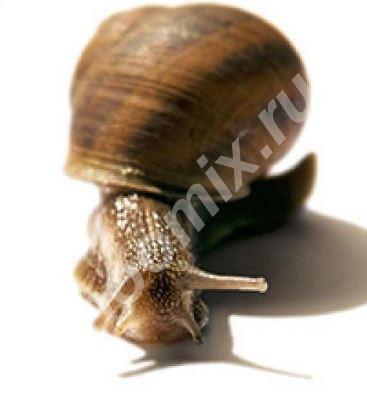 Snail-active Стимулирует синтез коллагена, Тверская область