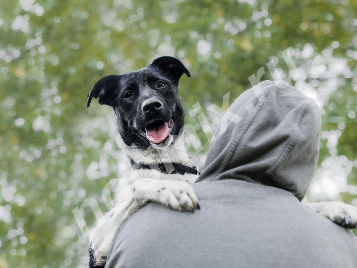 Небольшая классная собачка Кайли в добрые руки,  МОСКВА